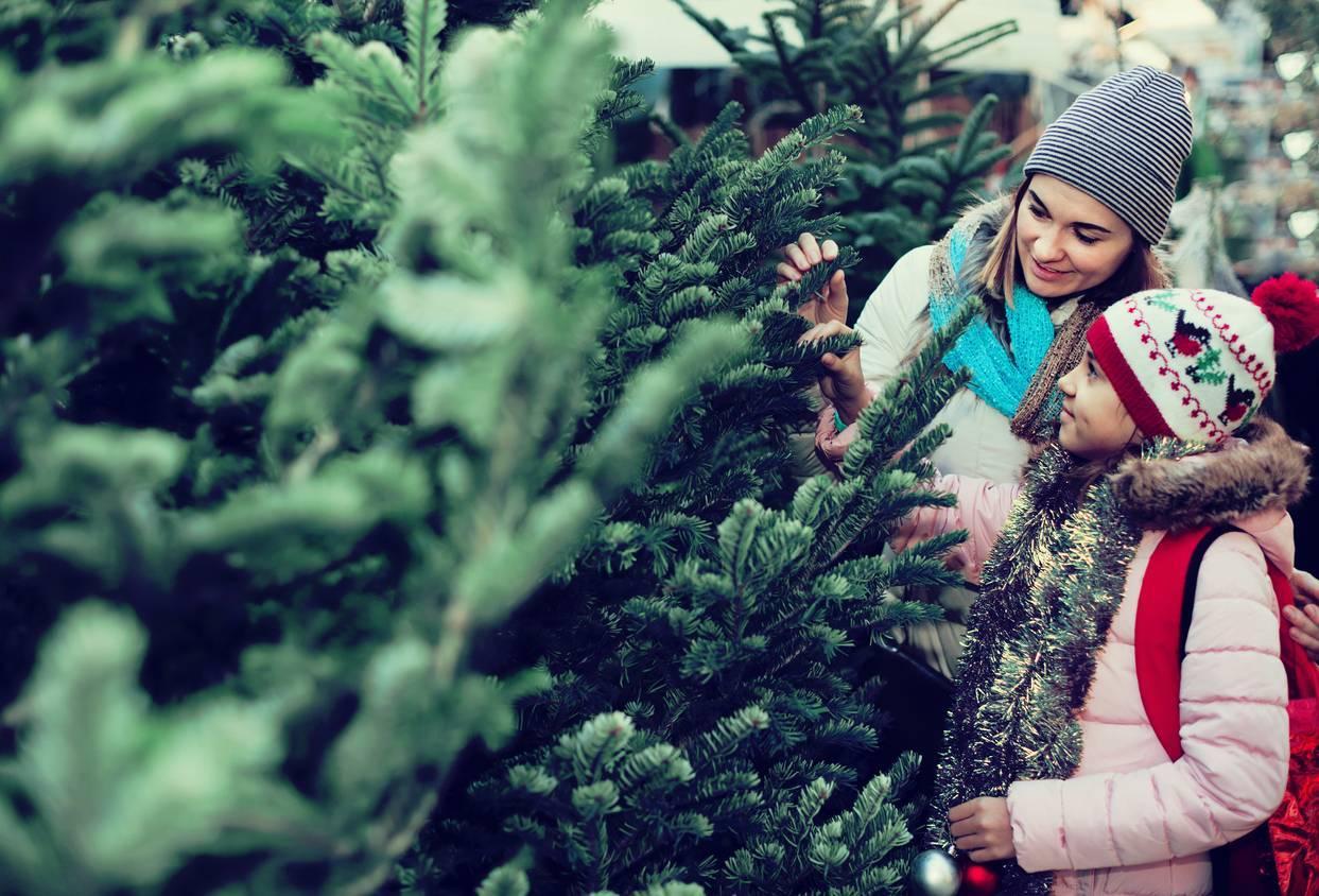 sapin de Noël en ligne